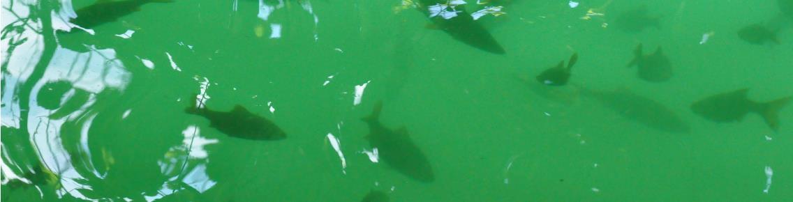 Fische im Schmalen Luzin