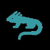 Anonymer Leguan (iguana) von Google Drive