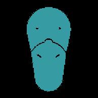Anonymes Schnabeltier (platypus) von Google Drive