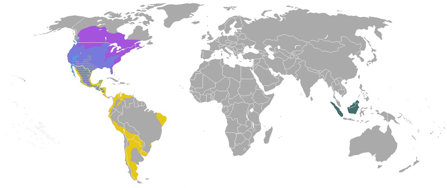 Verbreitungsgebiete verschiedener Skunkgattungen