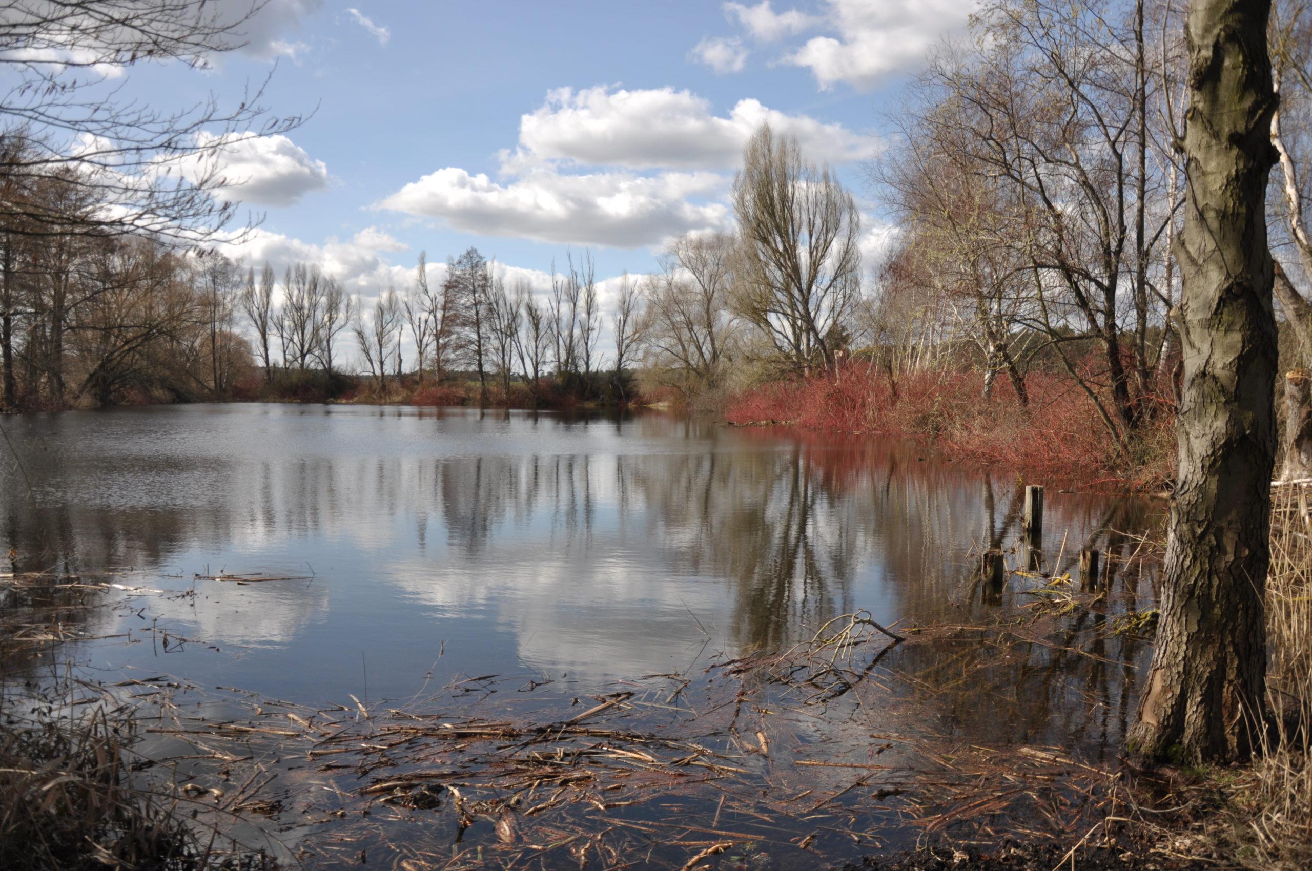 Teich zwischen Hennickendorf und Ahrensdorf