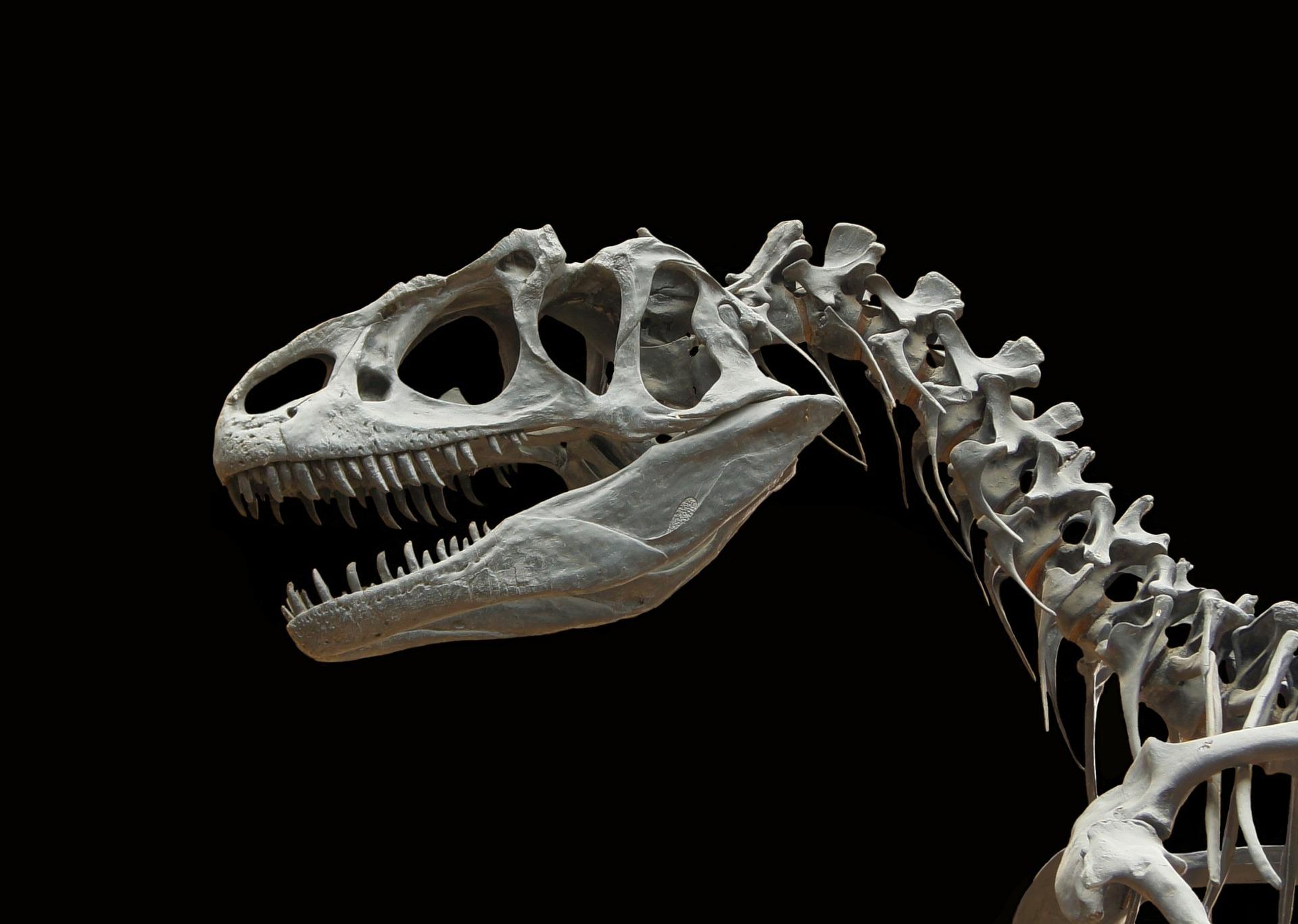 Dinosaurier - Allosaurus