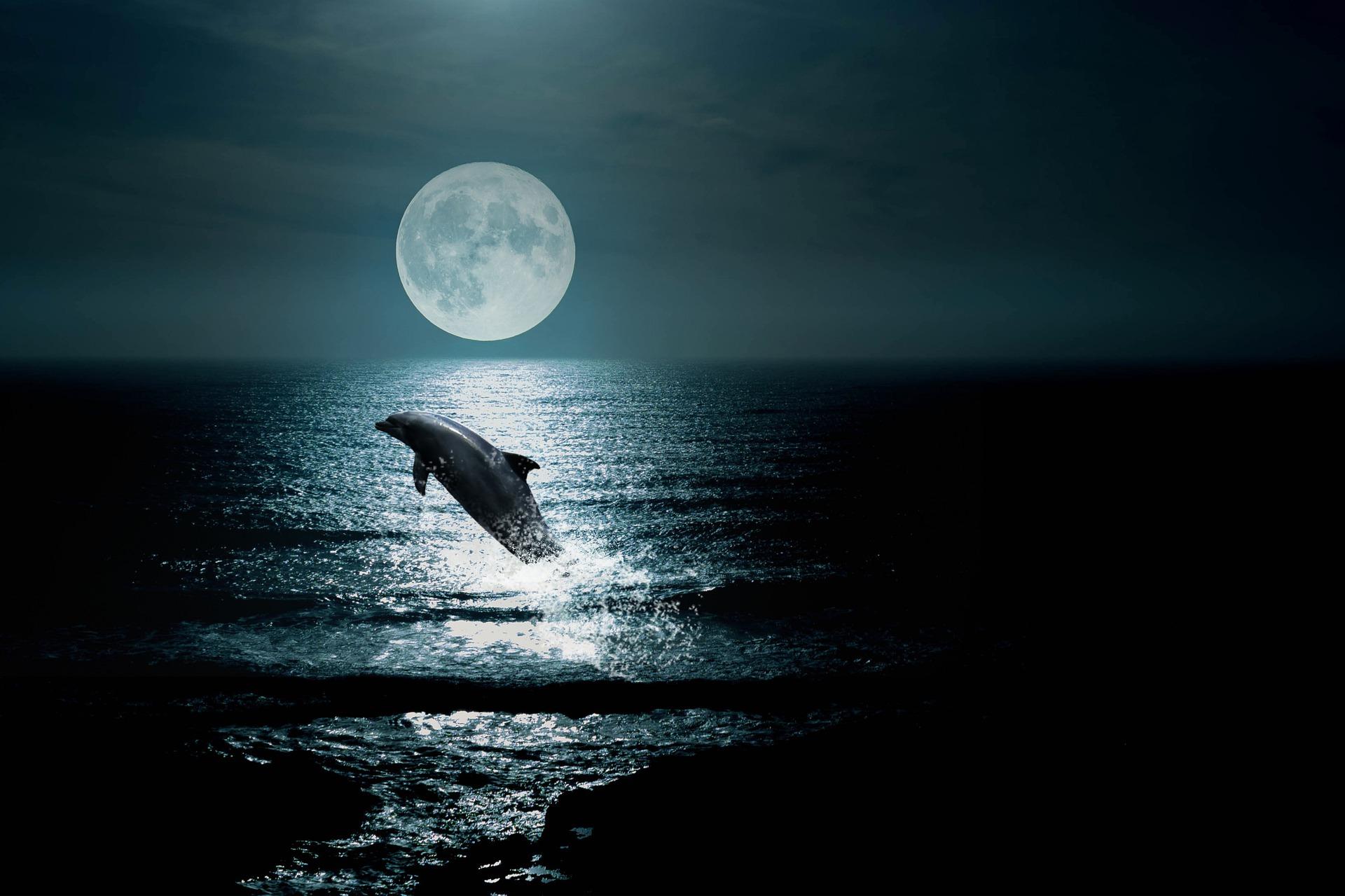 Delfin - dolphin